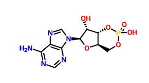 3',5'-cyclic AMP CAS:60-92-4